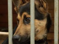 Pomagamy zwierzakom ze schroniska